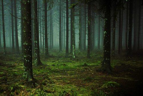 Waldererlebnis Natur Outdoor Spannung Geheimnisvoll